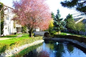 Lynnwood WA Furnished Housing 6
