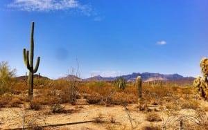 organ-pipe-cactus-national-monument-phoenix-arizona-united-states
